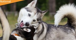 Canine Behaviour Diploma Course from COE