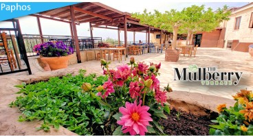 Come for a True Taste of Cyprus at The Mulberry Terrace